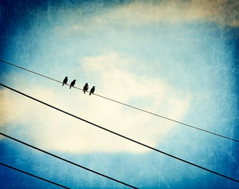 """Bird on wire photography - blue white cream beige black dark blue wall print telephone wires sky nursery - 8x10 Photograph, """"Four of a Kind"""""""