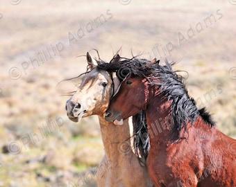 Friends - Mustang Stallions