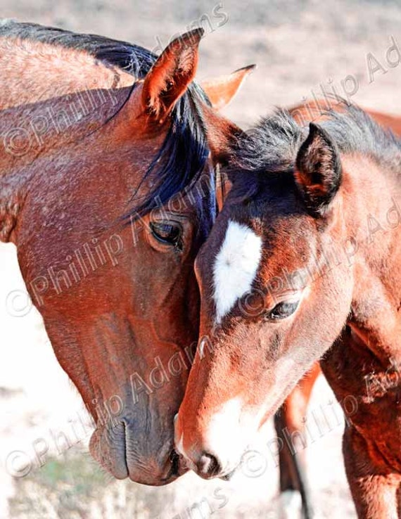 """A Mother's Love 2 - Mustang Mare & Foal - 8.5"""" x 11"""""""