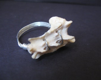 Bone ring - wire wrapped bone jewelry- Vertebrae Wire Wrapped Ring