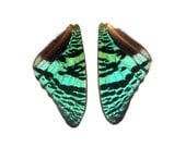 5 pairs of real Sunset Moth irridescent green wings  - for crafting and art projects