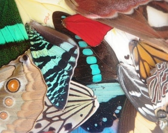 6 different pairs of real butterfly wings for art and jewelry projects - real butterfly wings - cruelty free - taxidermy