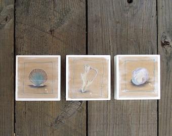Watercolor Sea Shell Triptych