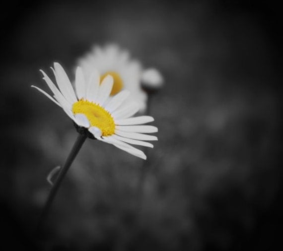 Beacon Of Light fine art photography daisy by ...