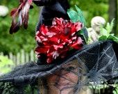 Witch Hat Red Bird