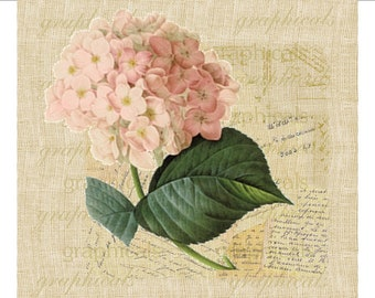 Pink hydrangea French decor instant clip art Digital download graphic image for iron on fabric transfer burlap decoupage pillow tag No. 1709