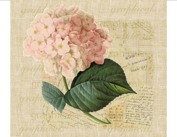 Ortensia rosa arredamento francese istantanea clipart digitale for Tessuti arredamento francesi
