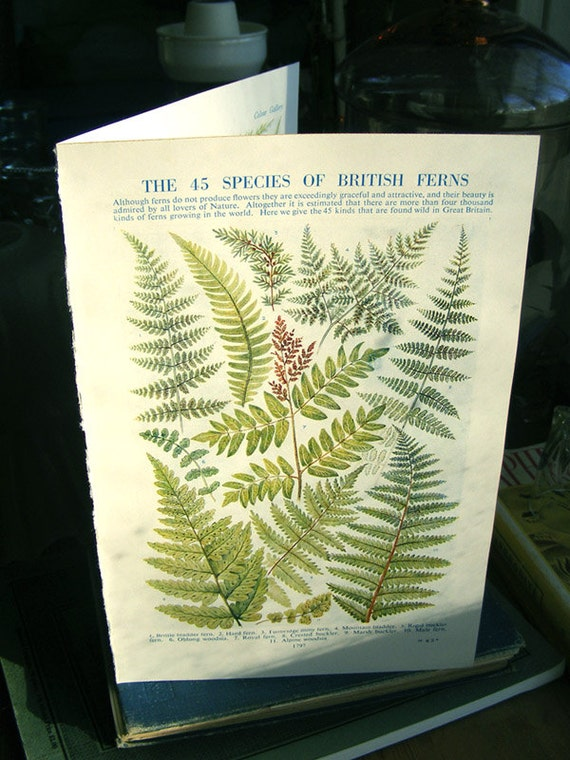 45 Ferns 2 Prints holly fern maidenhair fern print, antique print, botany print, published 1933