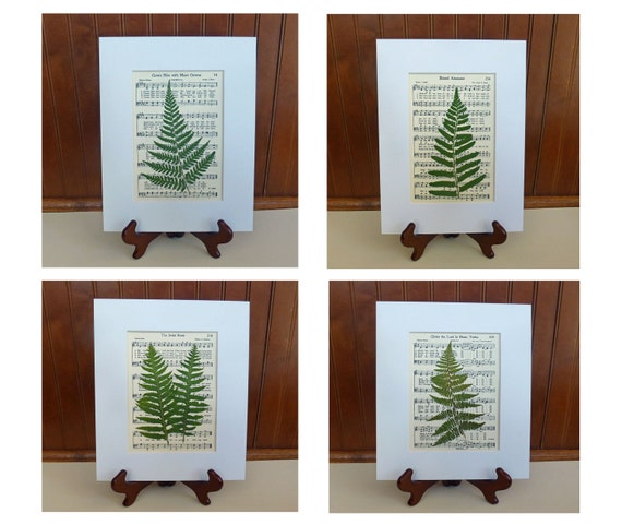 Real Ferns on Classic Hymns, Botanical Art, Set of 4,  Matted 8x10's,  pressed leaves, pressed botanicals, free shippiing