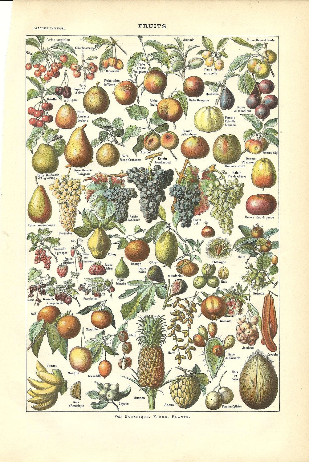 Antique Botanical Poster Print Fruits French Dictionary