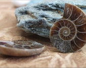 Ammonite Fossil Pair Cabachons from Madagascar