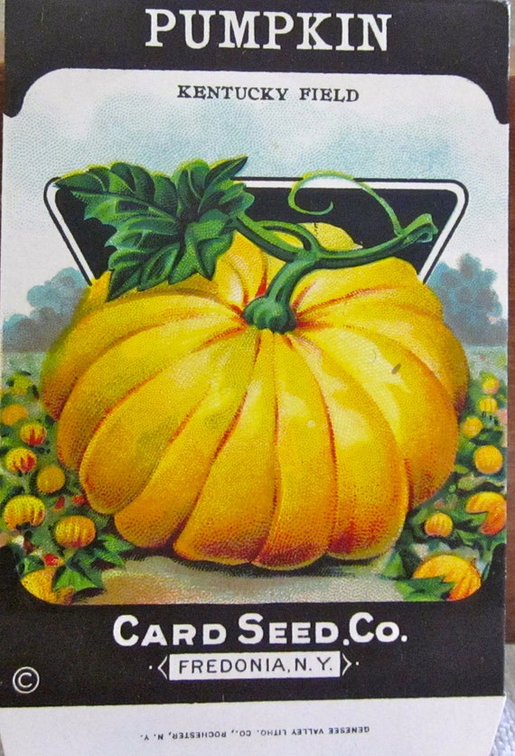 fruits of the harvest- colorful pumpkin-vintage seed packets   1940s