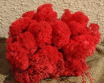 Reindeer Lichen-Red