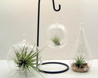 Hanging Glass Terrarium or Christmas Ornament holder made of Wrought Iron S