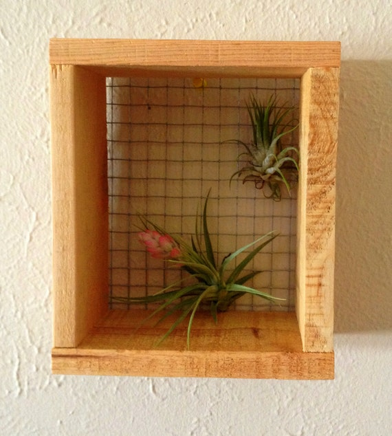 Air Plant Wall Hanger Art