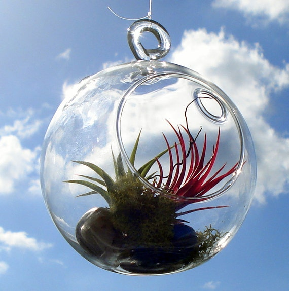 Globe Air Plant Hanging Terrarium Clear Glass Orb Kit with Moss, rock or sand