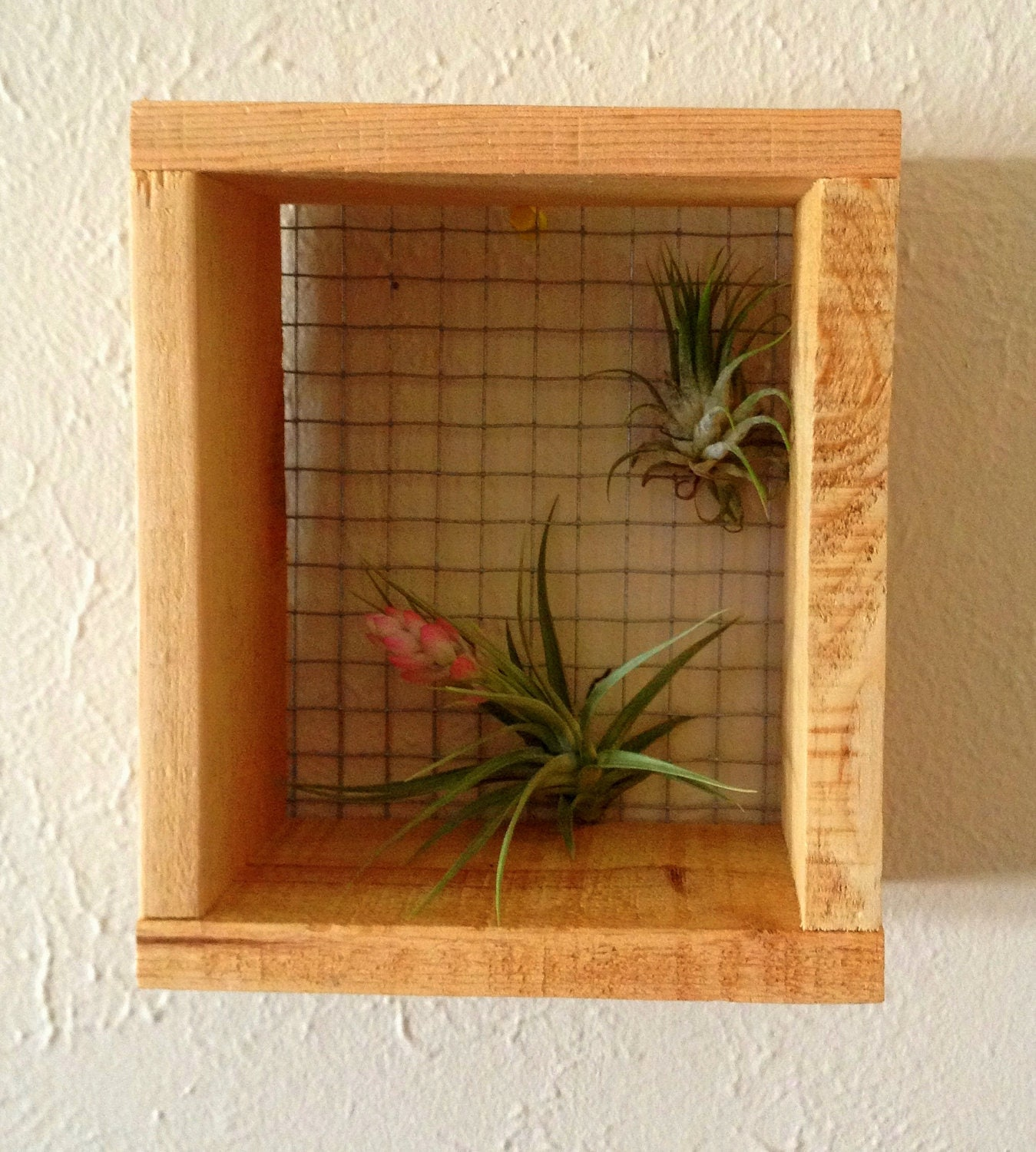 Air plant wall hanger art for Air plant wall art