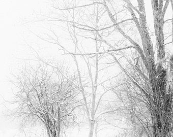 Winter Landscape Snowy Trees Lace Minimal Rustic White Gray Grey Snow Winter Photograph Black and White, Large Wall Art,  Fine Art Print
