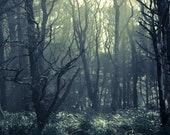 Moody Forest, Olympic National Forest,  8 x10 Photography Art Print
