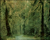 Dreamy Green Road, Path, Olympic National Park 8 x10 Fine Art Photography Print