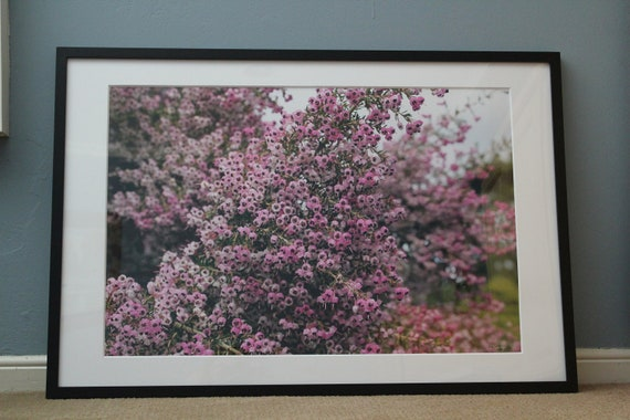 Christmas Heather--signed matted framed 20x30 photo