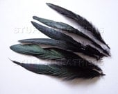 IRIDESCENT Black rooster feathers, loose rooster tail coque feather, jewelry millinery crafts, 6 pcs / 5-8 inches (12-20 cm) long / F56-5/6