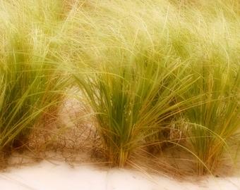 Dune Grass Fine Art Photograph Cottage Decor Beach Photograph