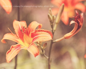Instant Download Spring Peach Tiger Lily Summer Wedding Flowers Texture - Fine Art Photography, Office Wall Decor Home Art Nursery Decor