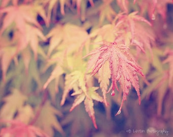 Nature Photography - Leaf Photograph - Fall Leaves - Fall - Leaves - Rain - Fine Art Photography Print - Orange Red Yellow Home Decor