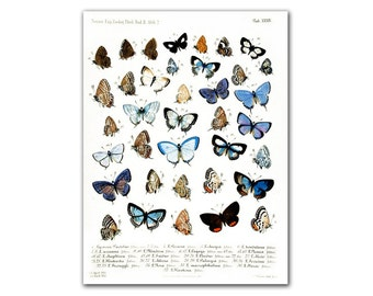 "13x17"" Butterfly Collection Educational board vintage illustration printed on Parchment paper, Nursery room decor, Butterfly Natural History"