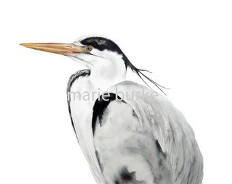 Grey Heron Portrait- fine art print