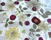 Wedding Table decor of Real dried Pressed flowers of Red Roses, Queen Anns Laces, Silver Leaves, Green Hydrangea