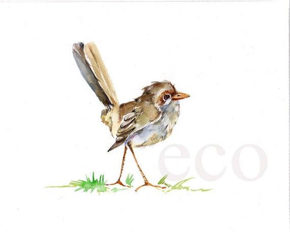 10x8 inch ORiGINAL WildLife Fairy Wren  watercolor painting