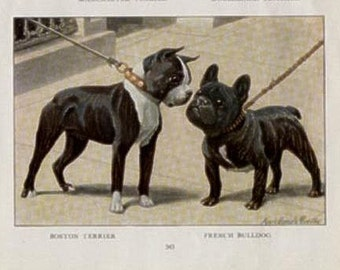 Boston Terrier Meets French Bulldog Vintage Photo Decoupaged on Wood