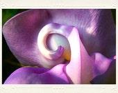 Twisty Purple Snail Vine Flower Close-up handmade photo note card