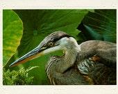 Great Blue Heron handmade photo note card
