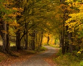 The back Way -  Nature photography, landscape photography, fall, autumn, fine art print, leaves, New Hampshire, New England, home decor, art