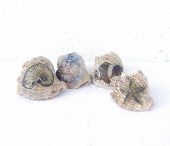 Sea Shells Craft Shells Beach Wedding Decor Sea Shell Decor Nautical Decor Ocean Supplies wedding table decor seashell decoration set of 4