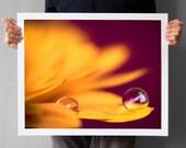 Autumn Mum Flower 16x20, Chrysanthemum Macro Photograph Home Decor, Chrysanth Macro Photography Print, Valentines Day, Gift for her