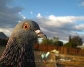 Pigeon Planning his flight SALE Fine Art Macro Photography