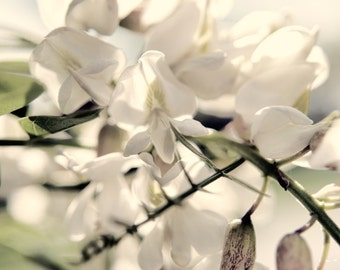Blloms on a Bright Day, Flower photography, fine art Nature Photography