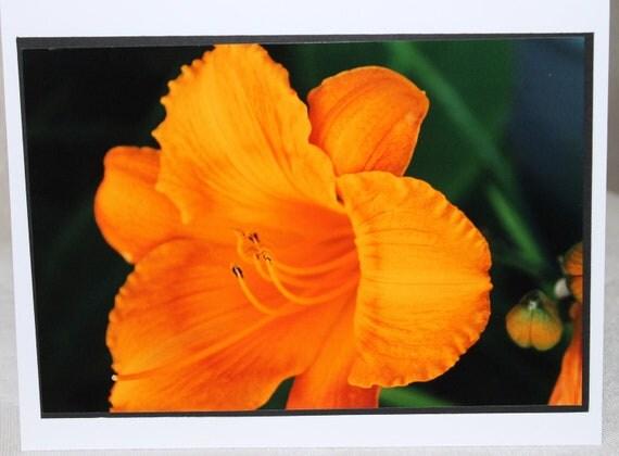 photo card, lily, orange flower photograph