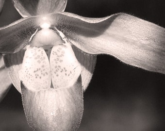 Black and White Orchid 1 -- Fine Art Floral Photography Print -- Photo, Home Decor, Flowers, Art
