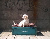 """Dog / Pet Bed from a Vintage Drawer: """"Bayou Graphic Rex"""""""