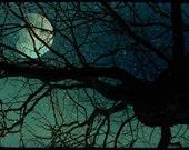 "Tree Branch Silhouette Blue Starry Night Sky Full Moon Wall Art Fine Art Print 8x12 ""Night Sky"""