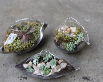 Miniature Terrariums Hand Blown set of 3