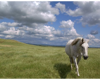 Out of the Blue: A White Horse emerges from the Clouds and Sky, 12x8 landscape
