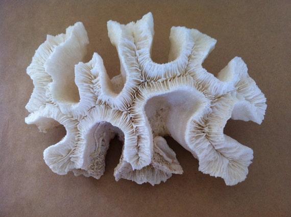 Real White Brain Coral Branch Nautical Beach Decor