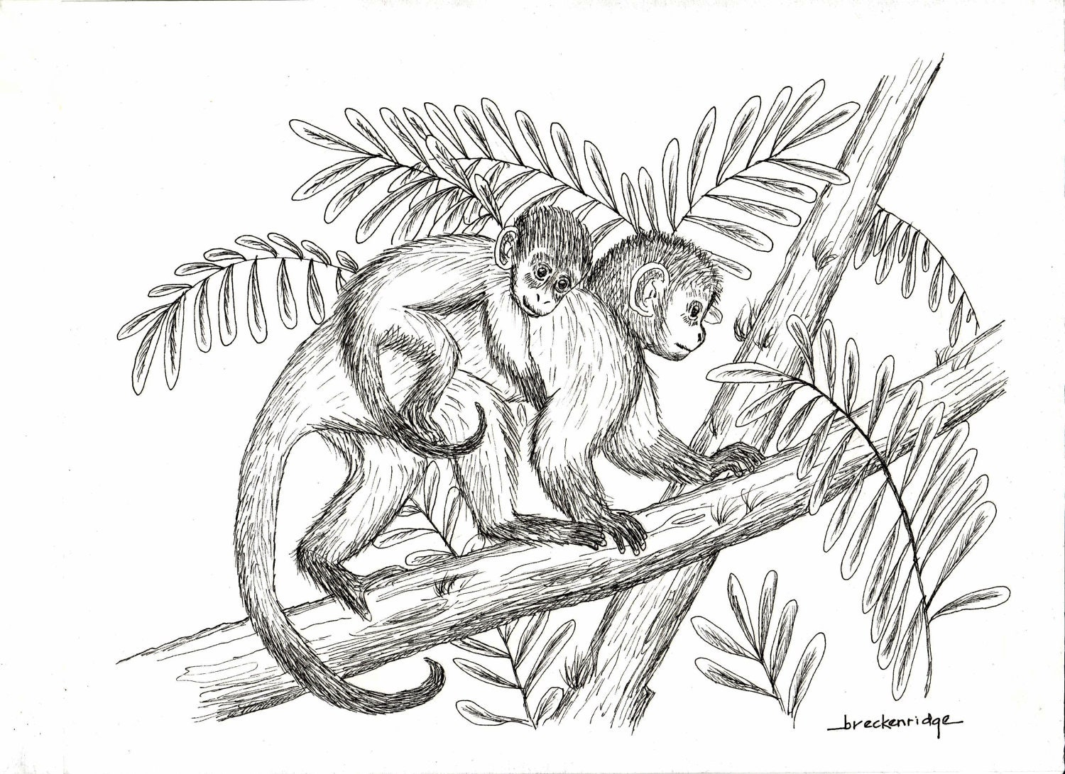 Line Drawing Monkey : Mother and baby monkey drawing print