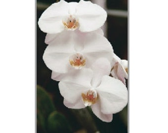 iPhone 5 case White Orchids Phone Art Print Photo iPhone Cover